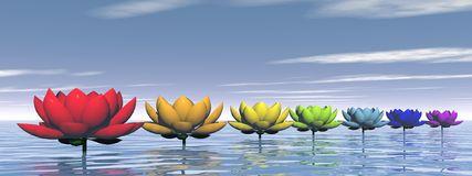 L'attribut alt de cette image est vide, son nom de fichier est chakra-lily-flowers.jpg.
